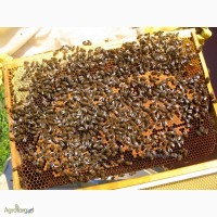 Продам пчелопакеты 50 шт, Сумская обл