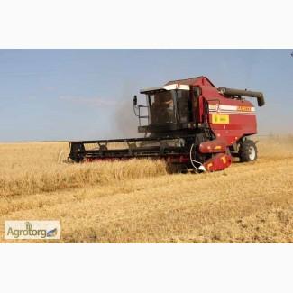 Закупаем кукурузу по всем регионам