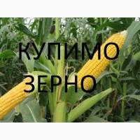 Компанія дорого купить кукурудзу яка не відповідає показникам ДСТУ