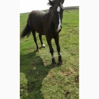 Продам коня - ціна договірна