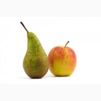 Куплю на экспорт яблоки и груши