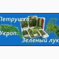Закупаем зелень лук укроп петрушка на постоянной основе Днепр