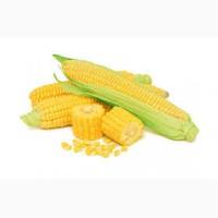 Крупнооптовая закупка. Кукуруза