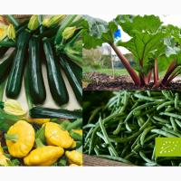 Продам органічні овочі врожаю 2019 року Ревінь Цукіні Патисони Спаржева квасоля