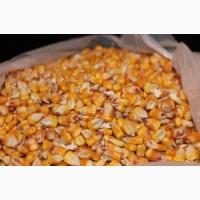 Куплямо кукурудзу биту, протравлену некондицію