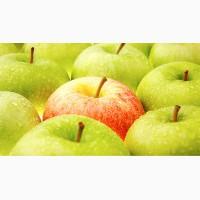 Куплю яблоки