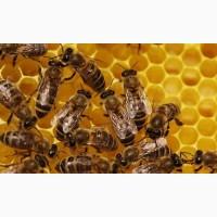 Продаються бджолосім#039; ї, рамки, суш