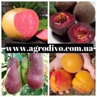 Яблони 50сортов, груши, сливы, персики, смородина, малина оптом и в розницу
