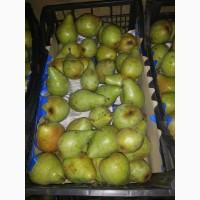 Продам грушу Ноябирська, Киргизьку