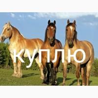 Куплю лошадей коней на убой дорого