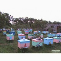 Продам пчелосемьи пчел
