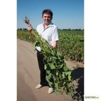 Семена сои лучшее в Украине