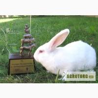 Реалезуем кроликов новой мясной породы-Белый Паннон.