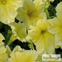 Продам семена петунии Желтая F1