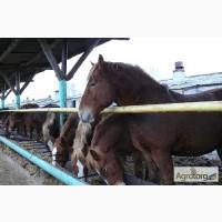 Сено для лошадей с бесплатной доставкой по Украине