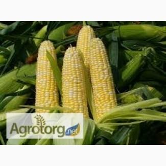 Купим кукурузу(Фураж).ВСЯ УКРАИНА