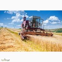 Производим закупку Пшеницы