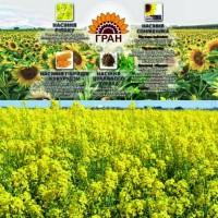 СНІГОВА КОРОЛЕВА насіння ріпаку від фірми «Гран»
