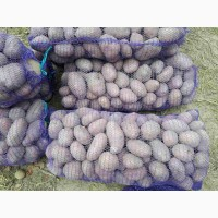 Продаем картошку большую Альвару Сантэ, Белла росса по5 грн и крупную Гренаду по 6