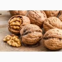 Продаємо грецький горіх, на постійній основі, урожаю 2017 р. Експорт