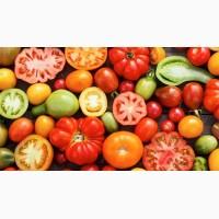 Куплю помидоры оптом