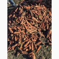 Морковь второй сорт