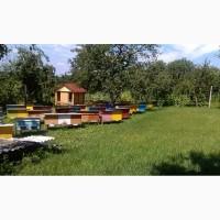 Бджолопакети 2019 Дадан