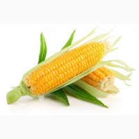 Купим кукурузу. Самовывоз