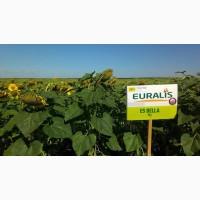 Пропоную насіння соняшнику Белла ЕС