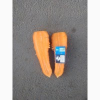 Продам моркву 2 с