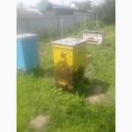 Бджолопакети карпатки поштою