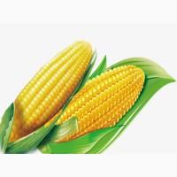 Куплю кукурузу (фуражную)
