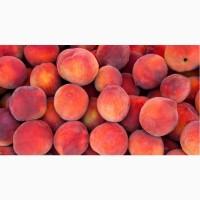 Продам персик оптом украинского производства. Качество