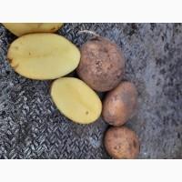 Продам Картошку отличное качество., картофель 6грн