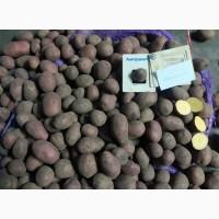 Картофель оптом. Семенной, товарный картофель