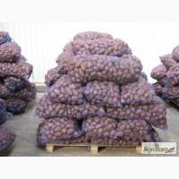 Продам картофель Одесса