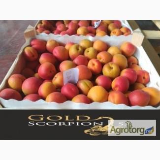 Продаем абрикосы из Испании