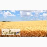 Купим пшеницу 2-фураж. Вся Украина