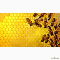 Закуповуємо мед та пилок оптом, Дорого