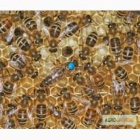 Продам Бджолосім#039;ї