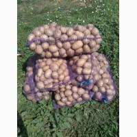 Продам картошку, Херсонская обл