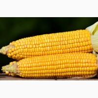 Кукурудза. Закупівля