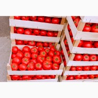 Оптовая реализация помидор томат