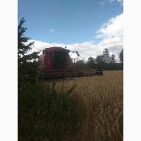 Продам зерно тритикале