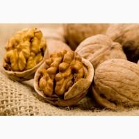 Экспорт (затаможка) грецкого ореха