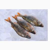 Рыба оптом Украина