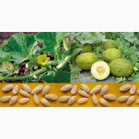 ГОРНОСТАЕВКА. Купить семена овощей 2020, интернет-магазин    Агро центр BSProduct