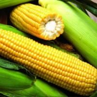 Покупаю кукурузу оптом