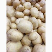 Продам Товарну картоплю / Товарний картофель