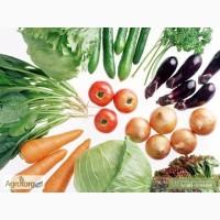 Семена Томатов купить в Украине